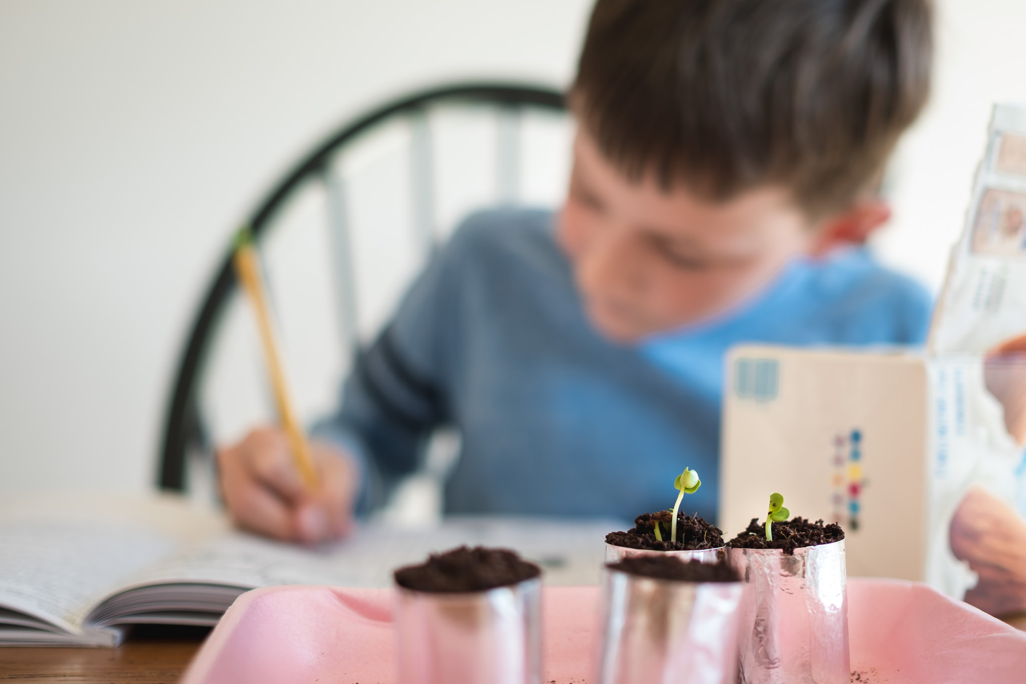boy writing in a book with sprouts in planters in front of him