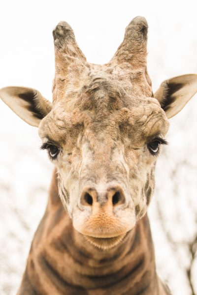 Wordless Wednesday: Zoo Trip