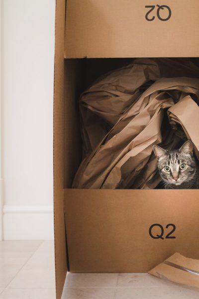 Tabby cat in large cardboard box